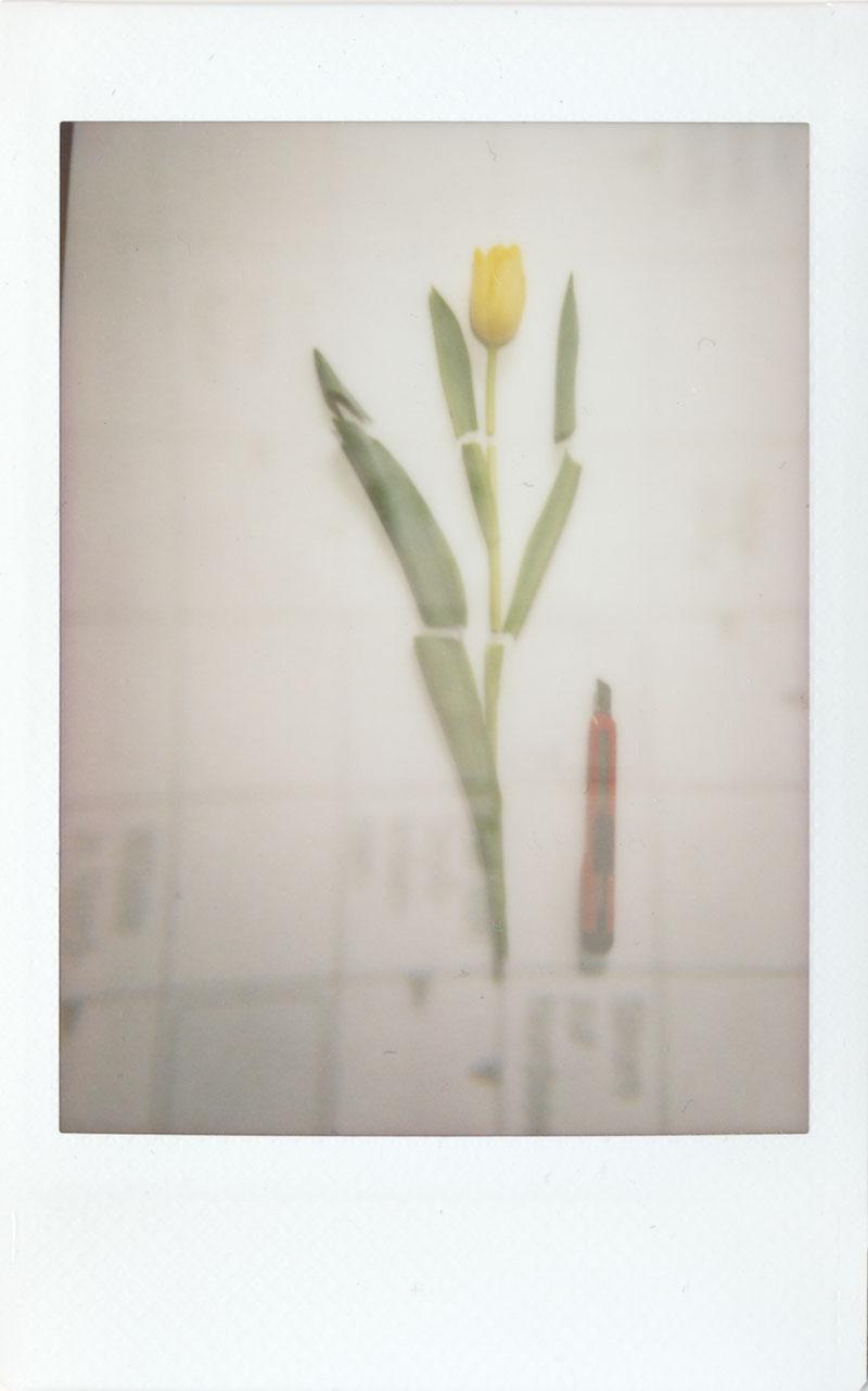 Senkrecht - Frühlingsblüher