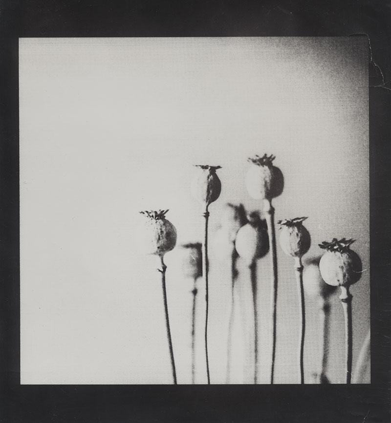 Opium aus der Glotze