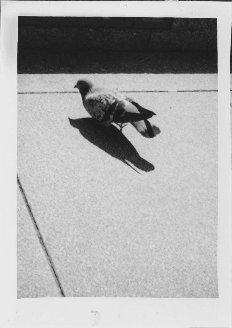 Der Versuch einer Taube ...