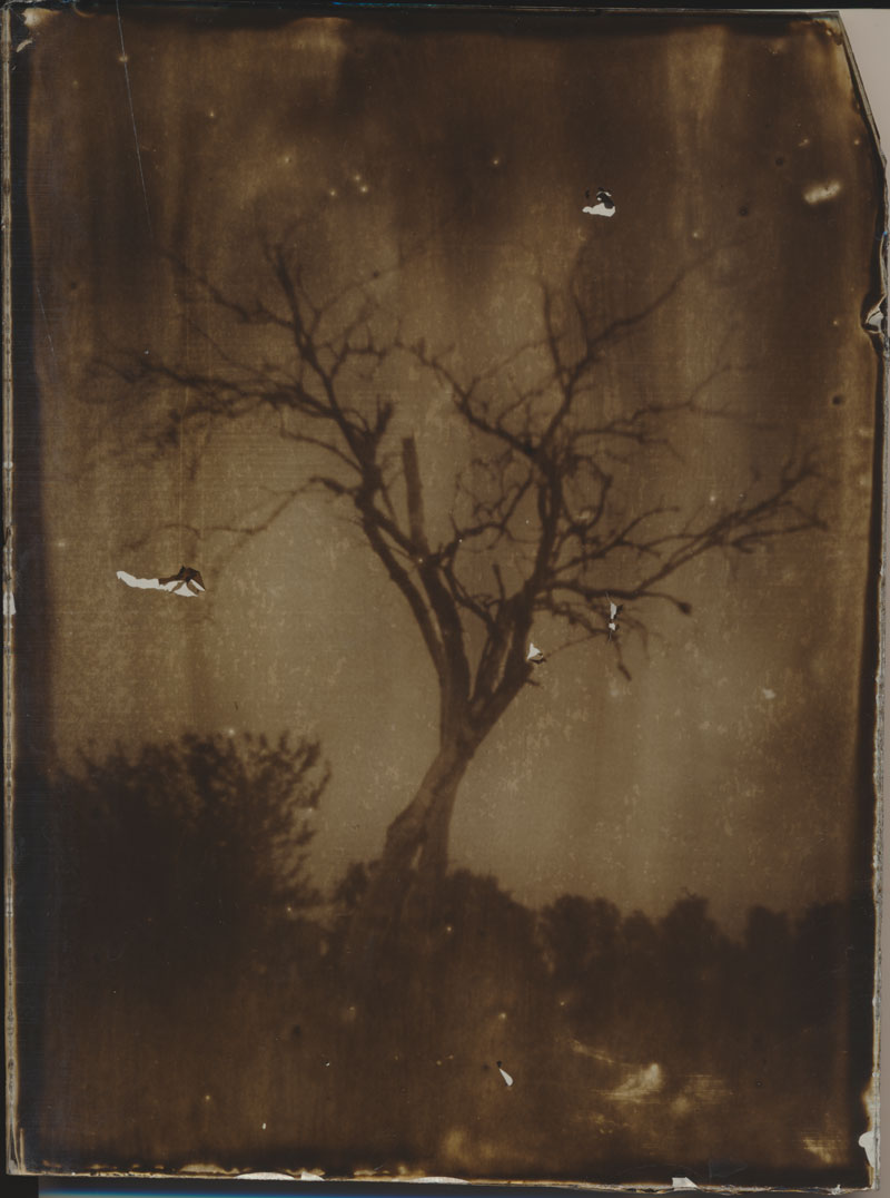 Ein Zweibaum