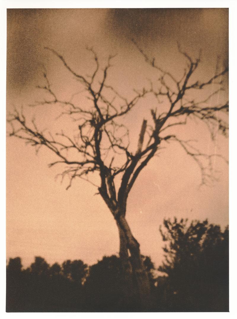 Der Baum, der ein toter Strauch war